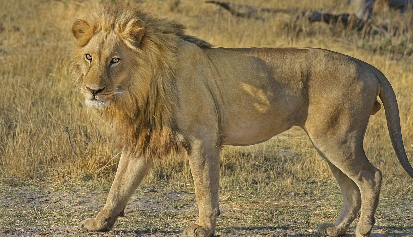 Safari pr